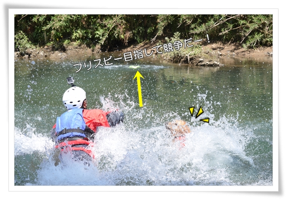 津保川で競争だ201505