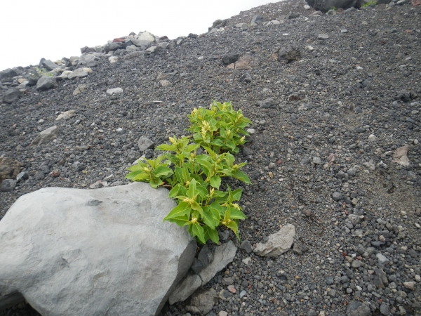 富士吉田登山口 065