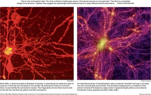 neuronuniversity simulation13de105d
