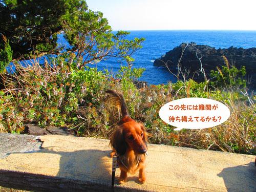 2015-02-izu63.jpg