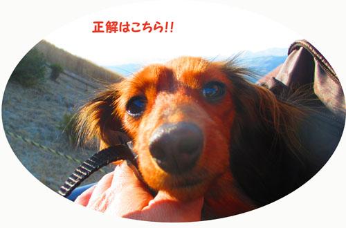 2015-02-izu83.jpg