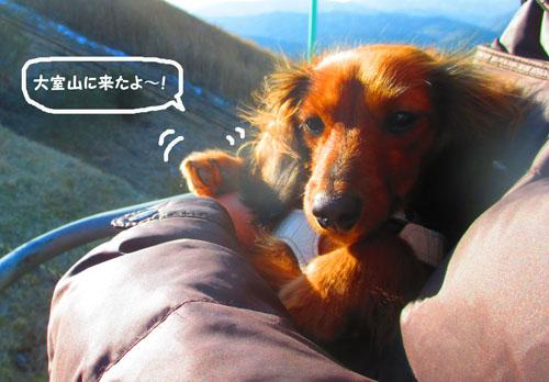 2015-02-izu85.jpg
