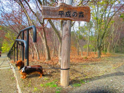 2015-02-satoyama4.jpg