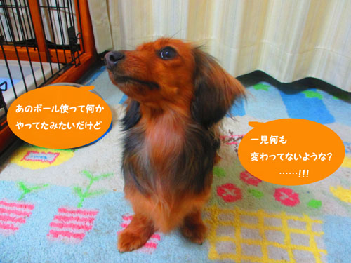 2015-03-toy7.jpg