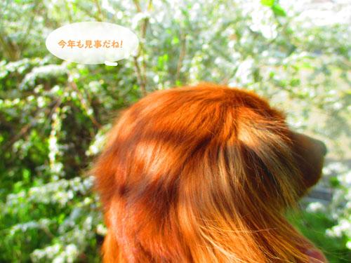 2015-03-yukiyanagi2.jpg