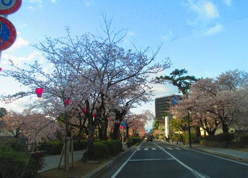 2015-04-sakura22.jpg