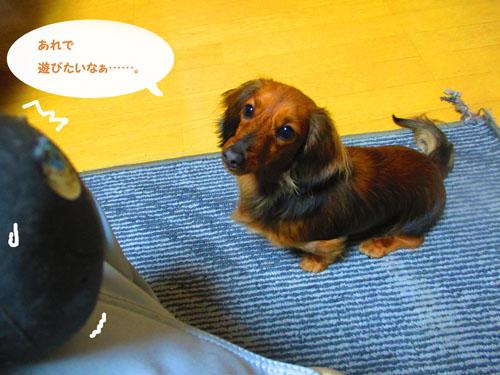 2015-04-tamago4.jpg