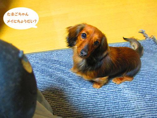 2015-04-tamago5.jpg