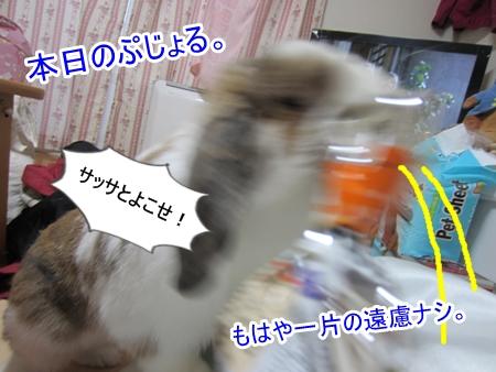 IMG_3096.jpg