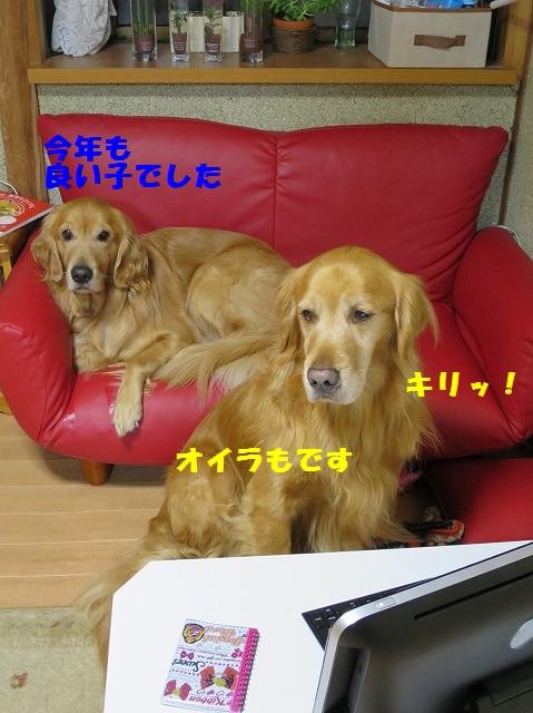 IMG_0550 (1)