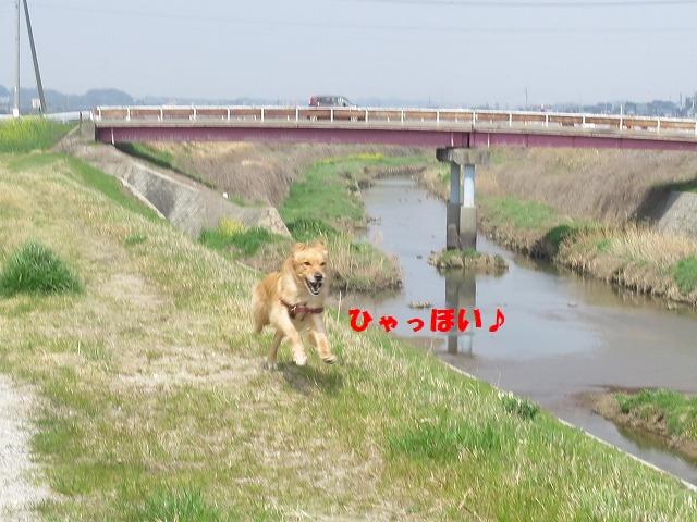 IMG_3193 (1)