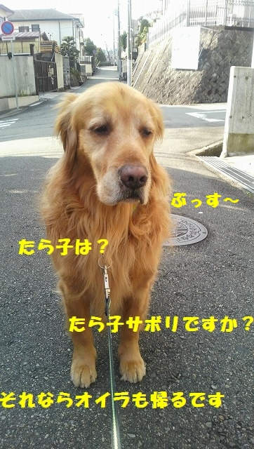 DCIM0771.jpg