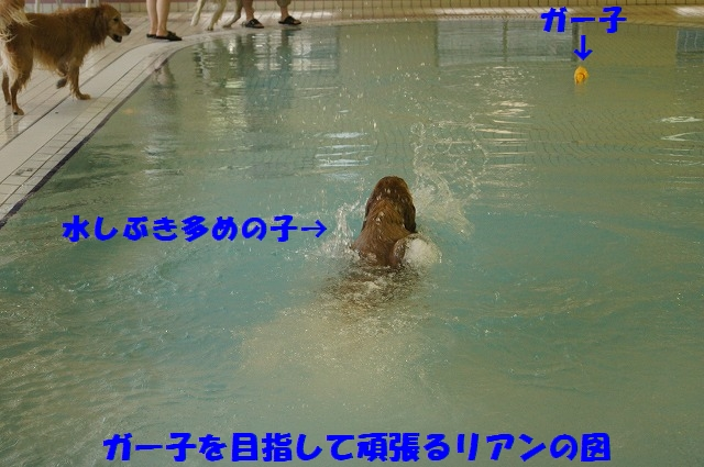 DSC03495.jpg