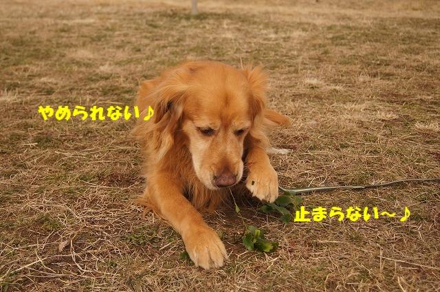 DSC04269.jpg