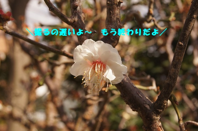DSC04335.jpg