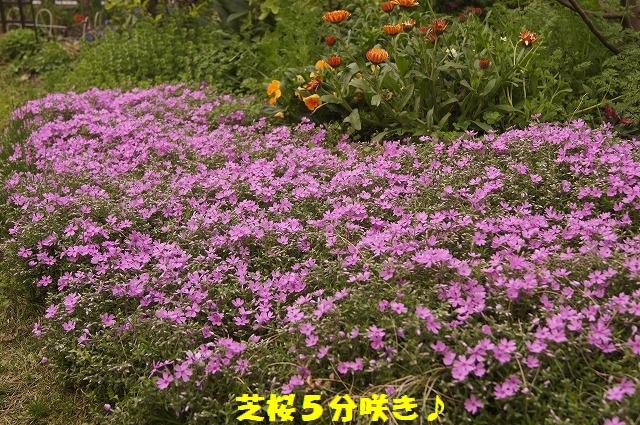 DSC04464.jpg