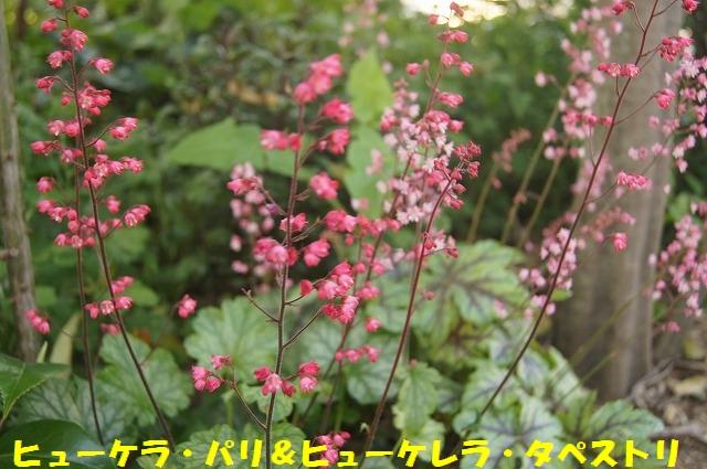 DSC04498_1.jpg
