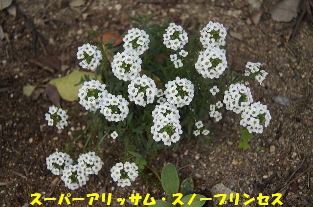 DSC04500.jpg