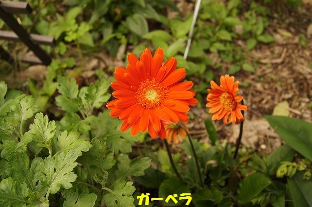 DSC04517.jpg