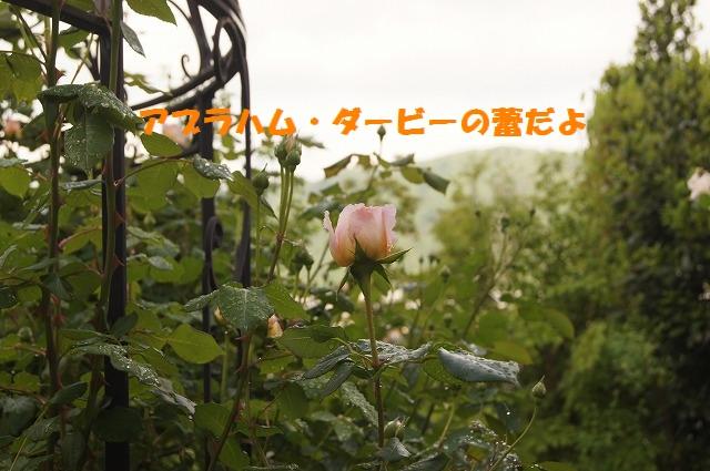 DSC04527.jpg