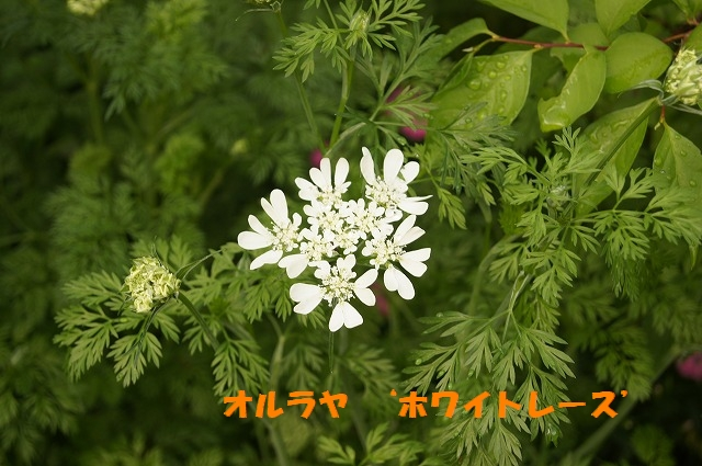 DSC04531.jpg
