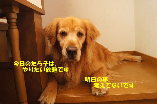 DSC04605.jpg