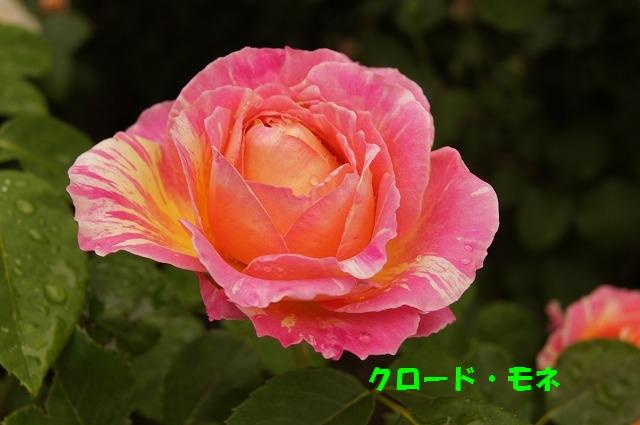 DSC04628.jpg