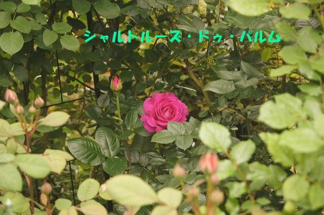 DSC04641.jpg