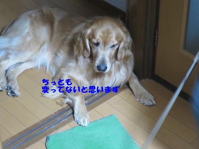 IMG_0950_20150112180234b19.jpg