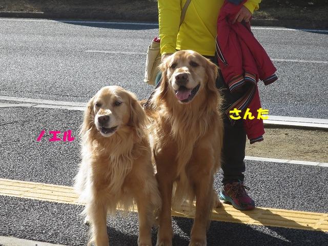 IMG_1523.jpg