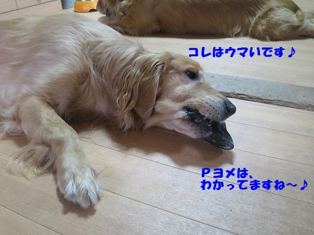 IMG_2635.jpg