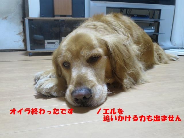 IMG_3338.jpg