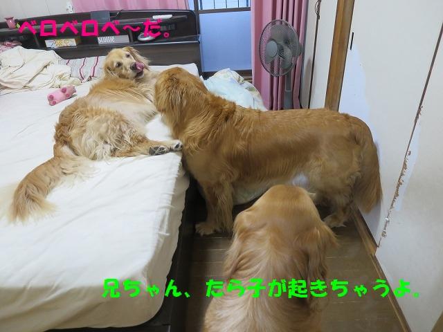 IMG_3739.jpg