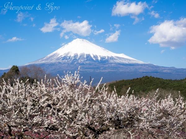 岩本山 H