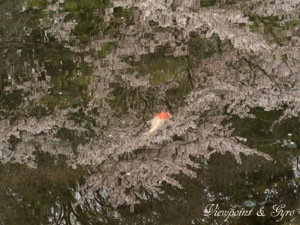 桜の情景 C