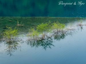 奥四万湖の浮島 C