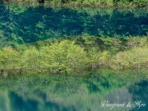 奥四万湖の浮島 F