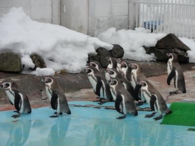 動物園 023