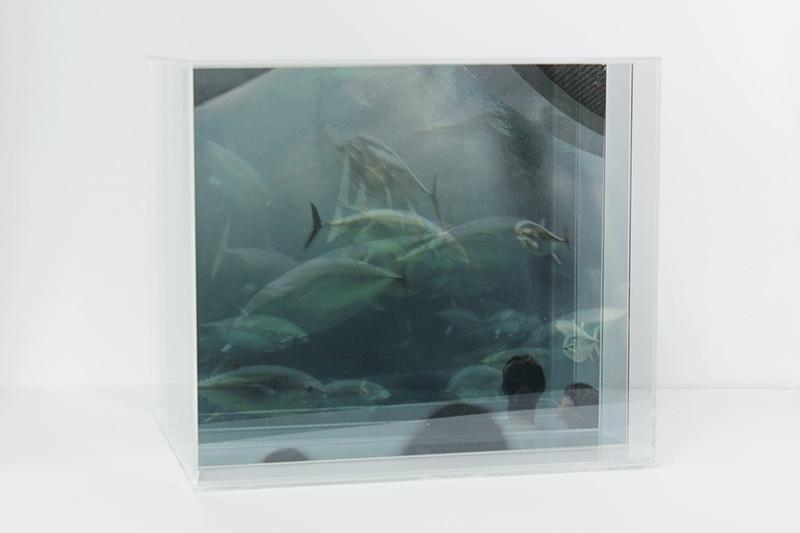 透明な箱 murmuring