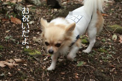 IMG_1066_20150322001719593.jpg