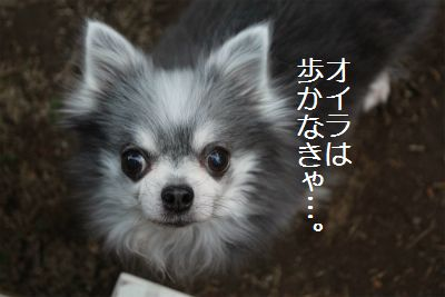 IMG_8410.jpg