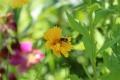 夏の庭08