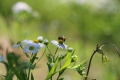 夏の庭10