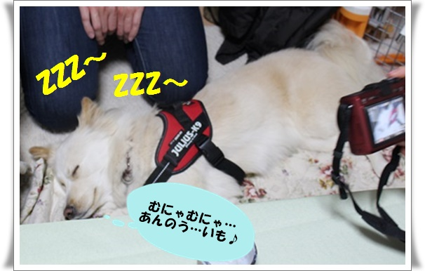 ♪ぷりちゃんの寝言
