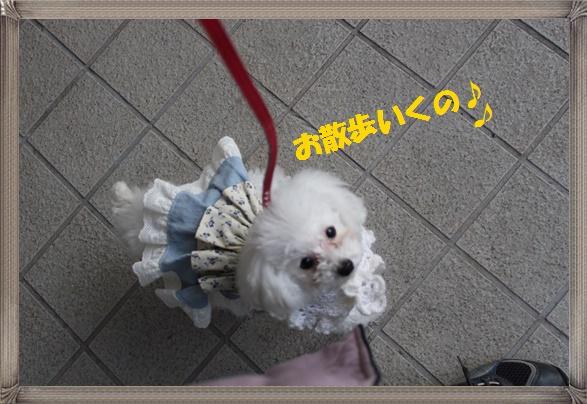 茉莉花のお散歩♪