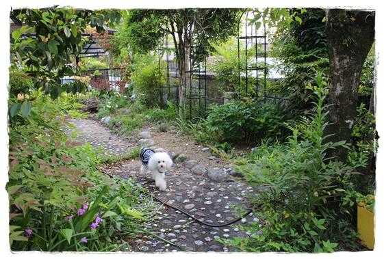 お庭散歩♪