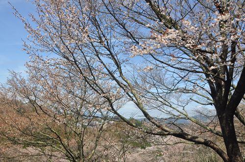 yosinoyama2015005_R.jpg