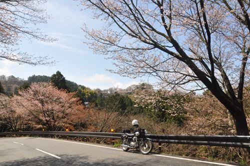 yosinoyama2015008_R.jpg