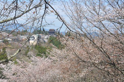 yosinoyama2015011_R.jpg