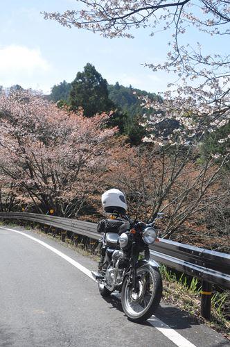 yosinoyama2015013_R.jpg